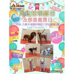 香港動物領養中心X利奧坊馬拉松領養日